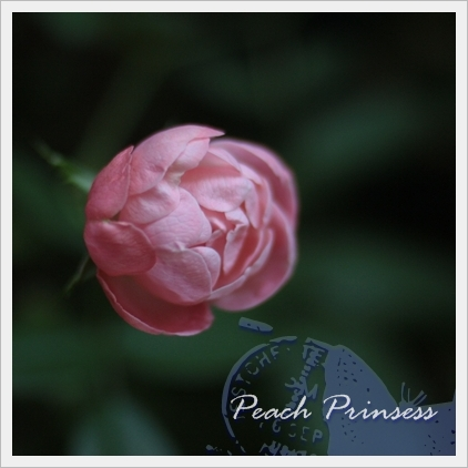 Peach Prinsess