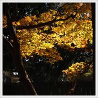 萌黄の館の紅葉
