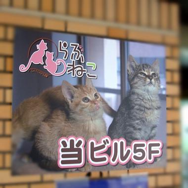 札幌ねこカフェ[らぶねこ]