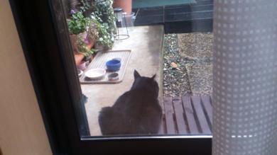 たそがれ黒猫_convert_20121216143021