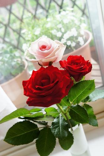 お花を見て、気分を盛り上げよう!