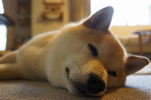 夜回りは疲れるですよ・・・。