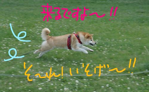 PR犬はなび②