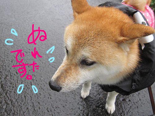 濡れたじゃん!!