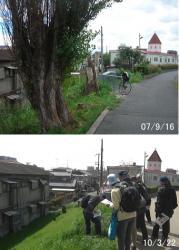 100322tree4.jpg