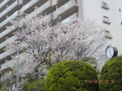 100413kasumi2.jpg