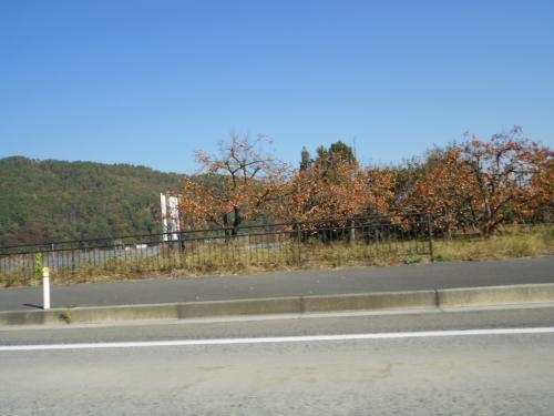 28里山の柿