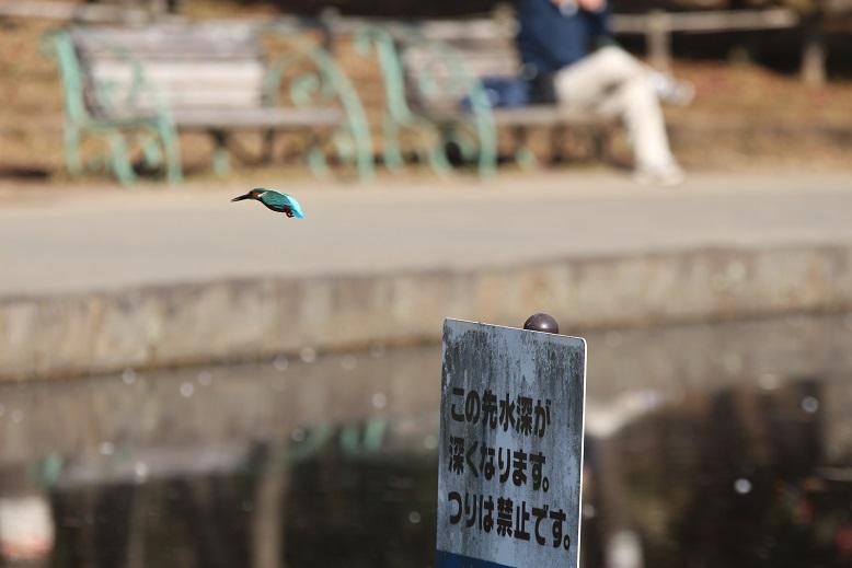 20140118せせらぎ公園1a