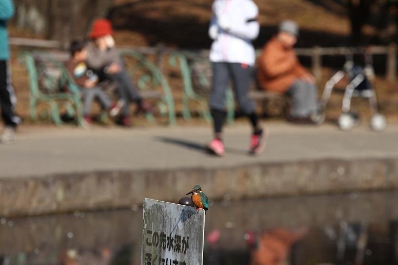 20140118せせらぎ公園a