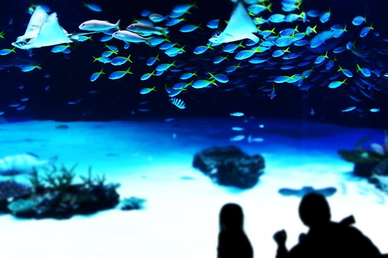 20140126サンシャイン水族館-2a