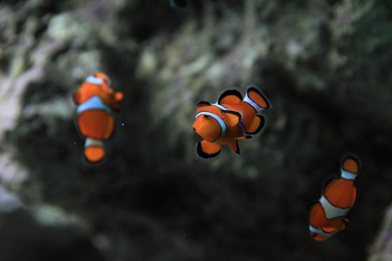 20140126サンシャイン水族館6a