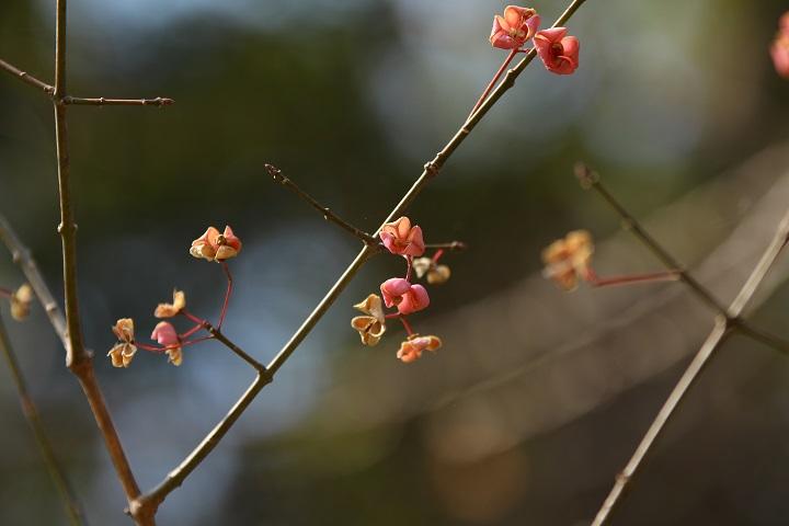 20130201茅ヶ崎自然園3a