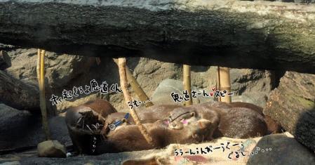 PB082250oyasumi.jpg