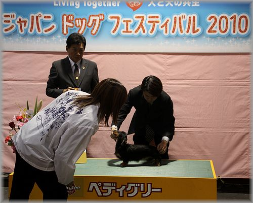 2010.12.18 ティーちゃん3
