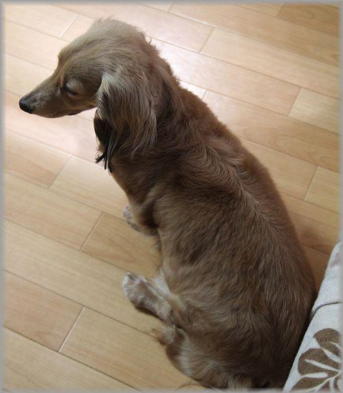 2011.3.8 ジェニー