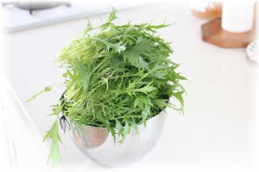 20120129水菜2