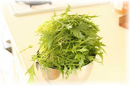 20120129水菜3