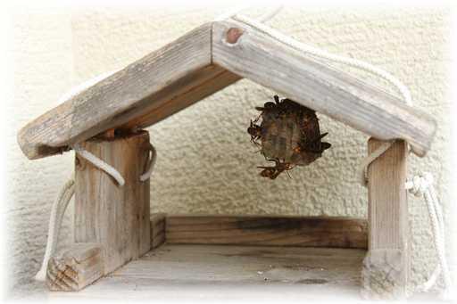 20120630蜂