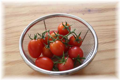 20120805ミニトマト