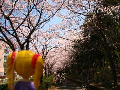 桜2012 001
