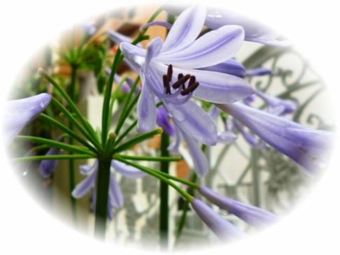 庭の花4-1