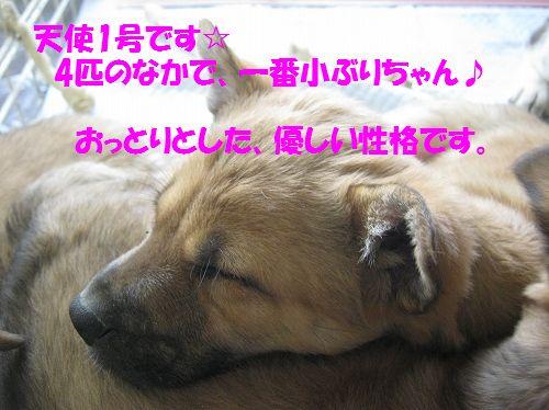 047_20140126112238ed7.jpg