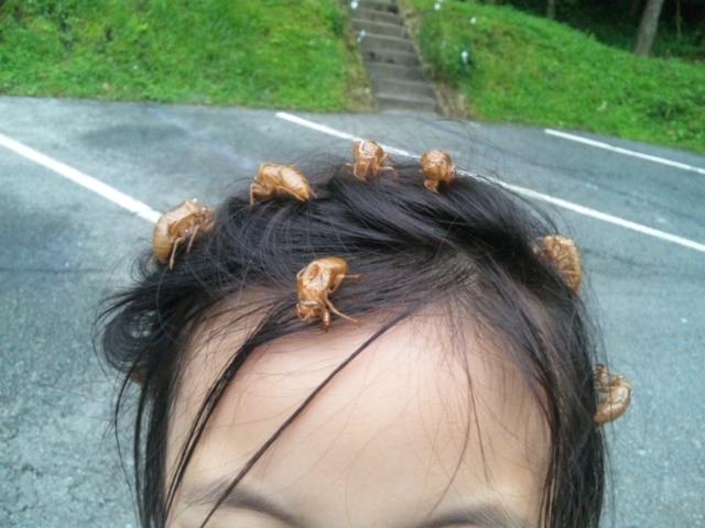 蝉の髪飾り