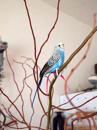 PUEBCOの鳥さんです。