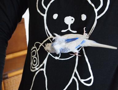 またクマのシャツ着てるよ。。。