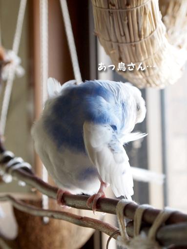 野鳥観察 始めます。
