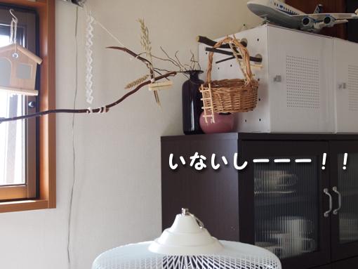 いないしーーー!!