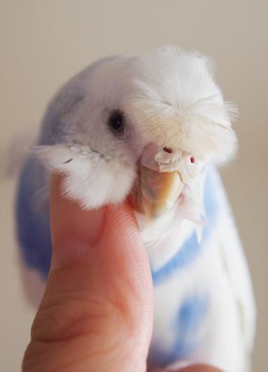 スミレちゃん…鼻のろう膜 剥がれそう…。