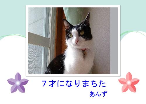 a 7sai