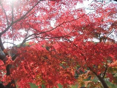秋の薬師池1