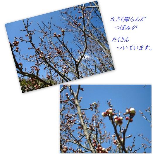 201203131015.jpg