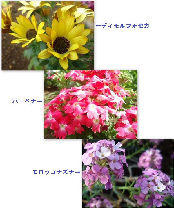 5月の花・20120505