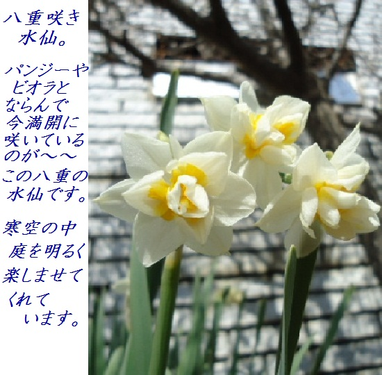 DSC03828.jpg