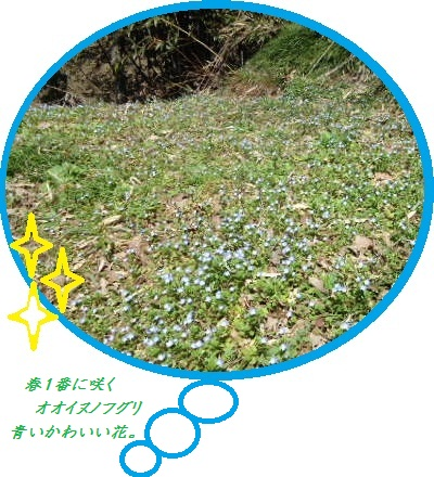 DSC03938.jpg