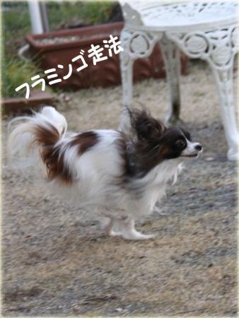 20110121_0923のコピー