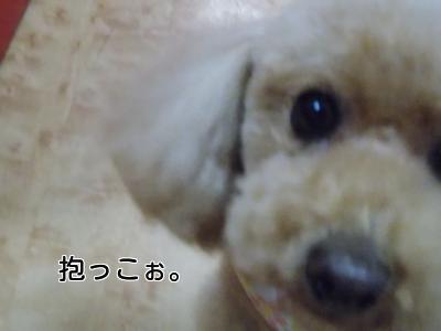 20140128_7.jpg