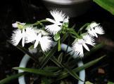 珍しい花(3)
