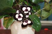珍しい花(2)