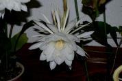 珍しい花(1)