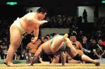 20121111sumo芳賀