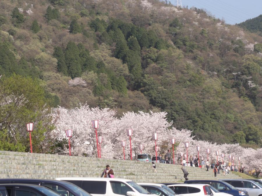 お花見in武丈公園