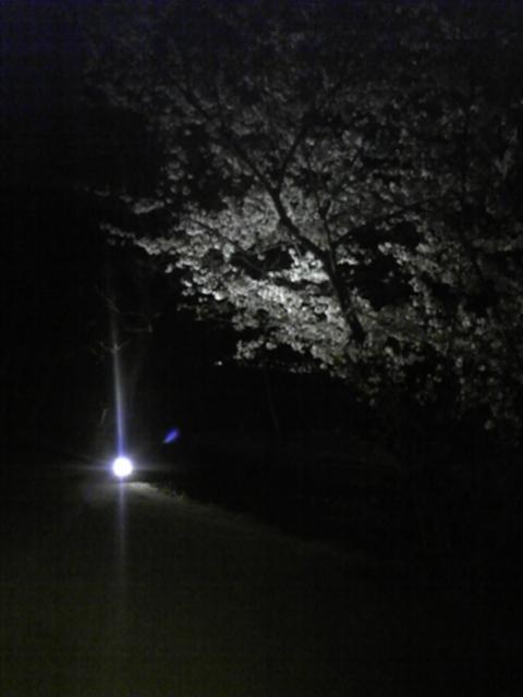 ライトアップ1