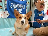 犬吉の日② (4)