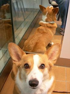 犬吉の日② (3)