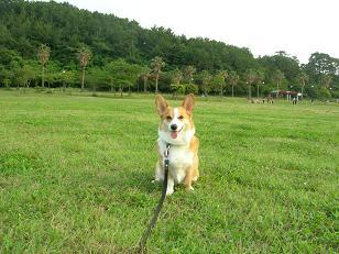 100619小戸公園 (8)