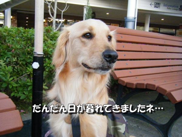DSCF3003_20100518003155.jpg
